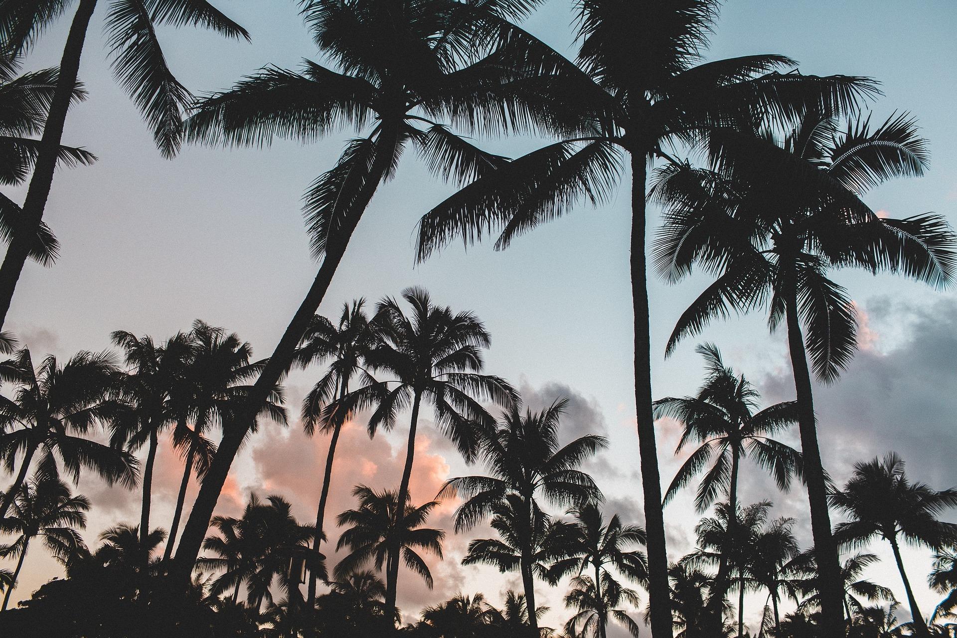 Palmiers, soleil bon pour la peau, intérêt du soleil, nutrition saine, comment avoir une belle peau